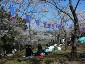 桜見物20120408